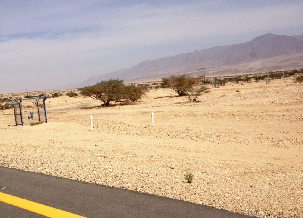 Справа видна проволочная изгородь, где-то там бродят страусы