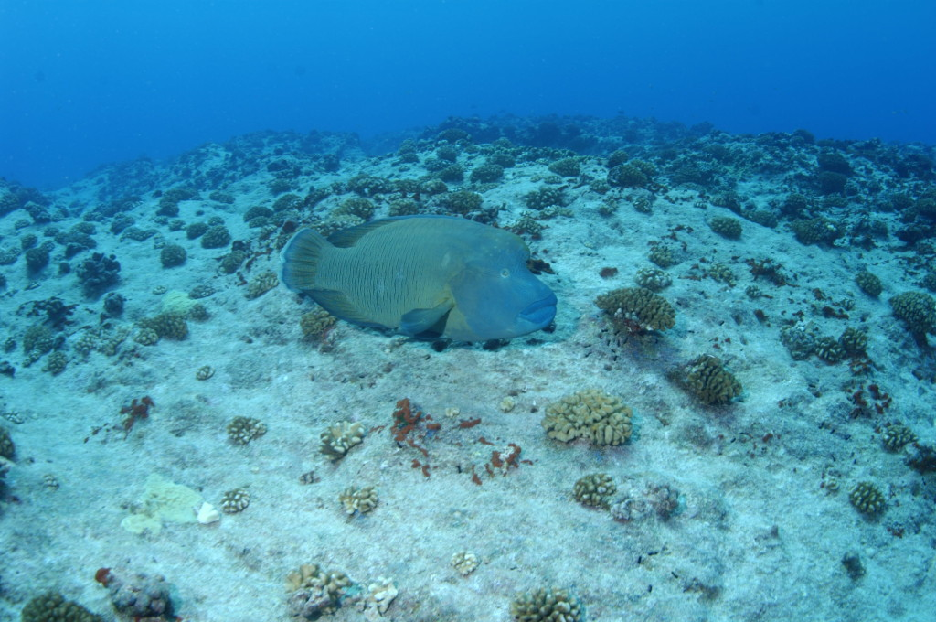 Кораллы другие и обитатели подводного мира