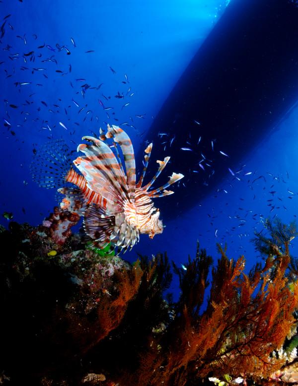 В Красном море под водой