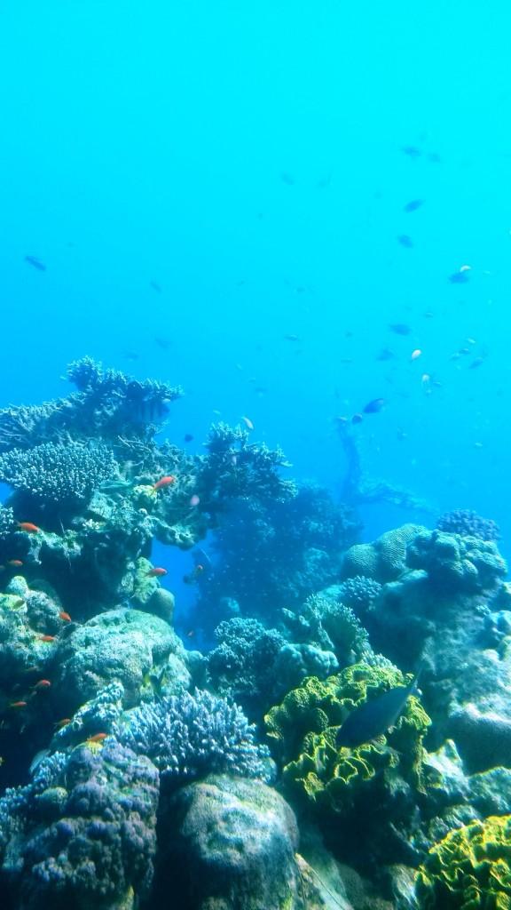 Кораллы в Подводной Оббсерватории